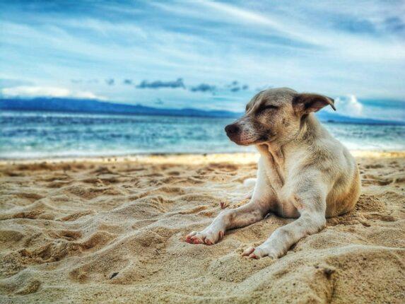 Må man tage hund med på ferien? Få svaret her